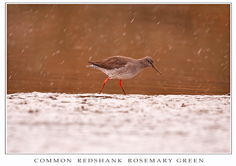 Redshank email print