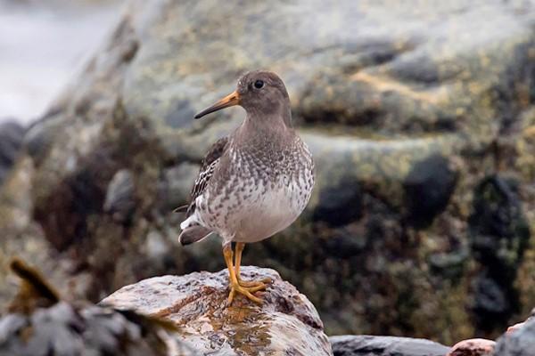 islay-bird-2