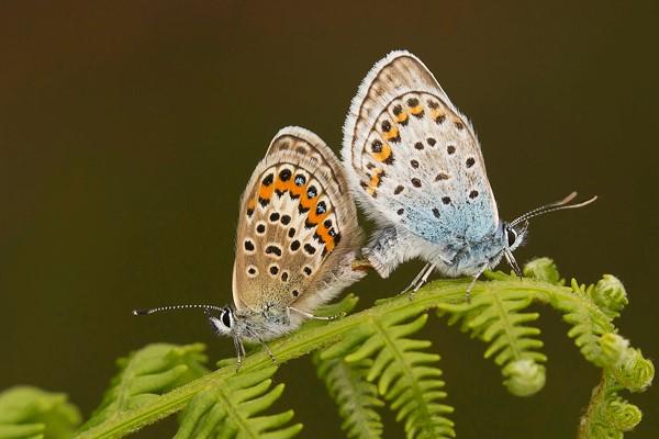 moths-2