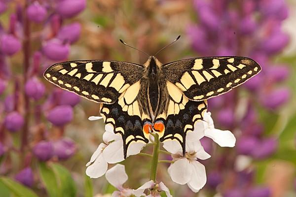 moths-3